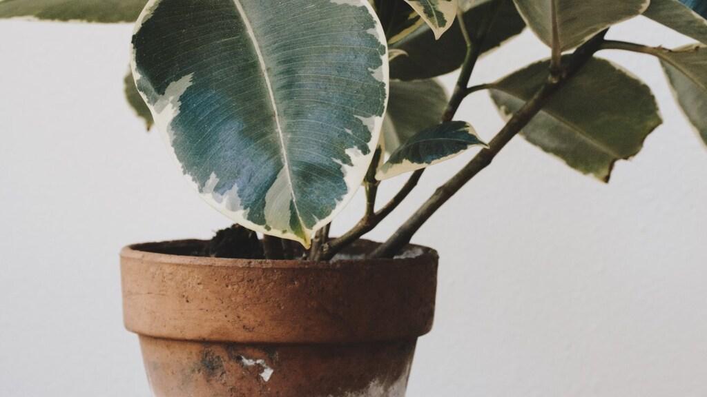 Voorkom schimmel op de potgrond van je kamerplant