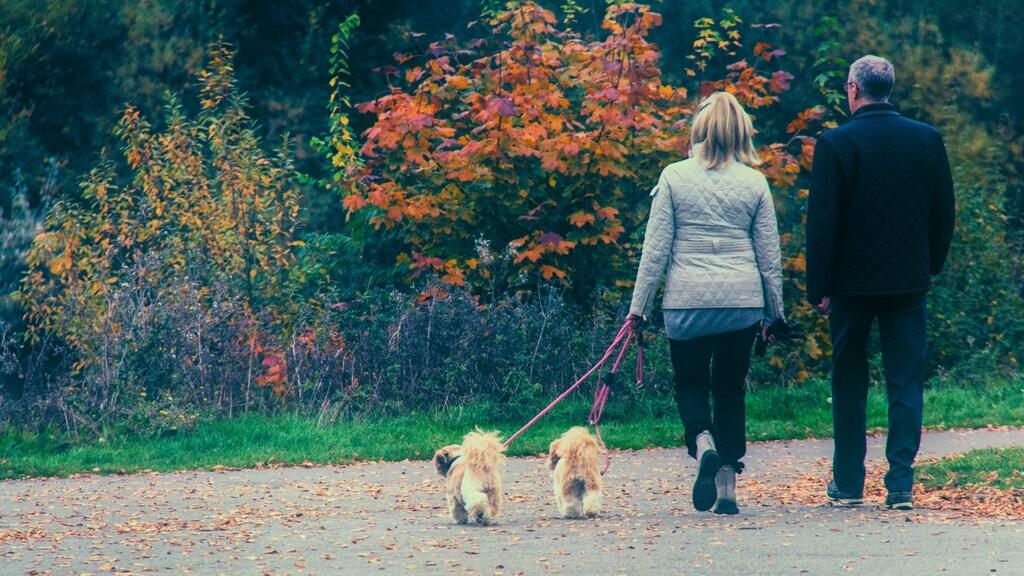 Maak de herfstwandeling met je hond leuker